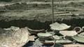 pottery, archeology, excavation 26159468