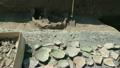 archeology, excavation, pottery 26159511