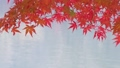 Water surface and Momiji 26172822