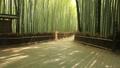 6月 木漏れ日の竹林の道ー京都嵯峨野の散策スポット-- 26202392