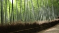 6月 木漏れ日の竹林の道ー京都嵯峨野の散策スポット-- 26202393