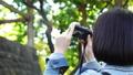 女性 カメラ 撮影 動画撮る ミラーレス コンデジ 外 緑 木漏れ日 パンする FIX 26210067