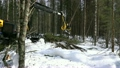 Forestry. View of logger cuts spruce trunk 26306214