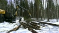 Forestry. View of logger loads trunks in forest 26306219
