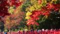 香嵐渓の紅葉(透過光)と見物客 26355338