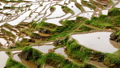 Terraced Rice Field 26469058
