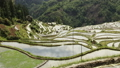 Time lapse of mountain and terraced rice field 26469059