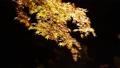 須磨離宮公園の紅葉 26480714