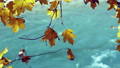 Tree branch with yellow autumn leaves over water. 26499179