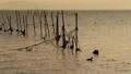今津から沖のエリを見る 26526687