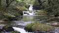 渓流 滝 川の動画 26560238