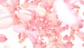 cherry blossom, cherry tree, petal 26645833