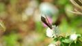 蝴蝶 昆虫 虫子 26660290