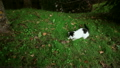 A cute black and white cat is playing with a brown 26672480