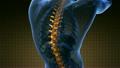 backbone. backache. science anatomy scan of human  26902398