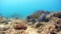 海藻吃海龜水下攝影固定 26974096