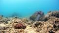 海藻吃海龜水下攝影固定 26974097