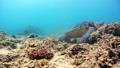 海藻吃海龜水下攝影固定 26974098