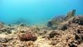 海藻吃海龜水下攝影固定 26974099