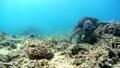 海藻吃海龜水下攝影固定 26974100
