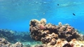 沖繩Akajima Nishihama海灘的水下攝影從底部向上傾斜 27240016