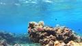 從左到右沖繩Akajima Nishihama海灘麵包的水下攝影 27240017