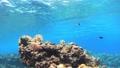 沖繩Akajima Nishihama海灘麵包的水下攝影從右到左 27240018