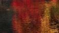 11月 川面に写り込む紅葉のさざ波 遠江の秋 27351392