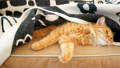 Cute ginger cat falls asleep on the couch under a 27388869