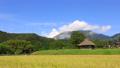 稲穂と茅葺き小屋のある風景 9月 27521774