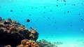 在沖繩Akajima的Nishihama海灘水下射擊縮小 27523603