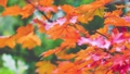 Autumn scene.Colorful foliage in the autumn park.  27555459