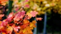 Autumn scene.Colorful foliage in the autumn park.  27555461