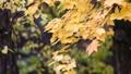 Autumn scene.Colorful foliage in the autumn park.  27555462