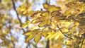 Autumn scene.Colorful foliage in the autumn park.  27555464