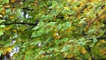 Autumn scene.Colorful foliage in the autumn park.  27555465