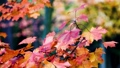 Autumn scene.Colorful foliage in the autumn park.  27555466