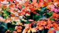 Autumn scene.Colorful foliage in the autumn park.  27555467
