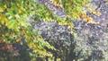 Autumn scene.Colorful foliage in the autumn park.  27555468