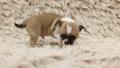 dog, animals, doggy 27586742