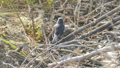 สัตว์,สัตว์ต่างๆ,นก 27591691
