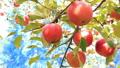 津軽りんご りんご園 27597500