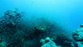 珊瑚と熱帯魚 27600327