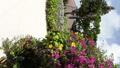 竹富島に咲く南国の花々 27600356