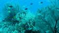 珊瑚と熱帯魚 27600390