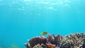 在沖繩Akajima固定的Nishihama海灘水下射擊 27680730