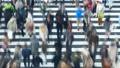 東京タイムラプス 汎用 大都会東京の交差点を行き交う群衆 流れる 横断歩道 パン 27785212