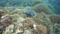 乌龟 海龟 水下 27838765