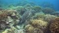 乌龟 海龟 水下 27838822