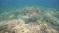 乌龟 海龟 水下 27838903
